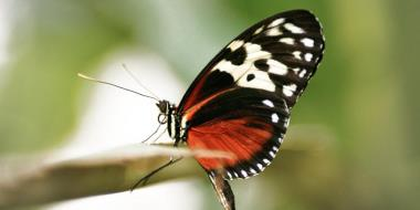 Fluture stand pe o creanga