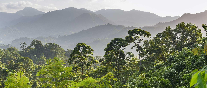 Leafy green jungle below impressive mountain range