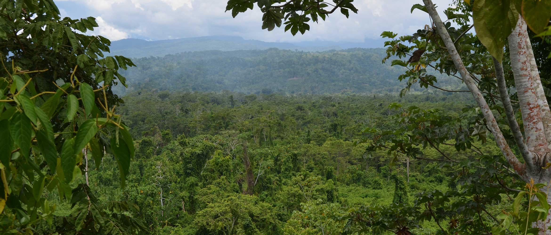 Leafy green jungle below a mountain range