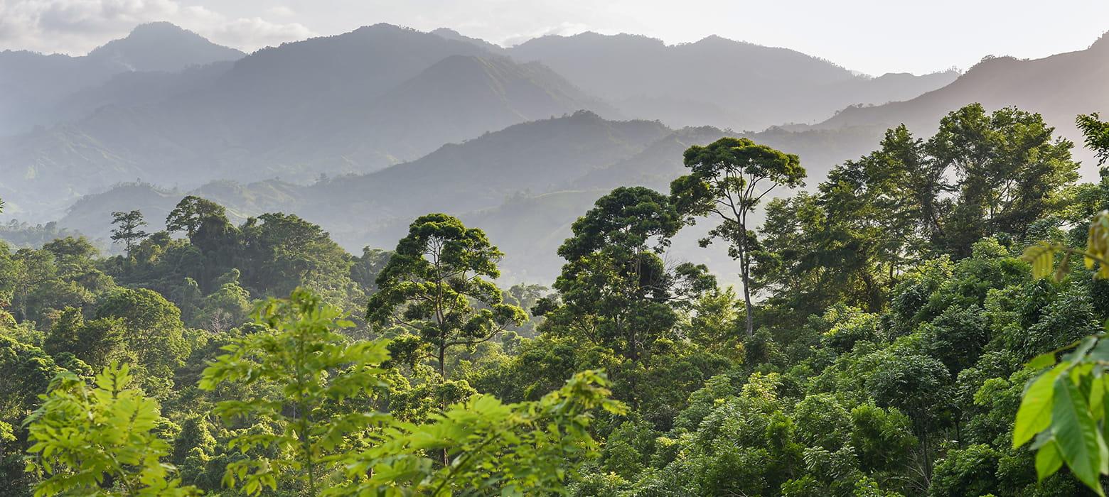 Pădure tropicală Honduras